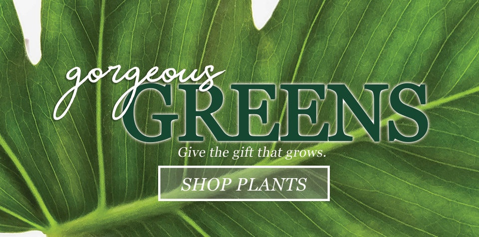 Plants | in bloom floris | orlando, fl | same day delivery | same day plant delivery