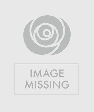 Roses & Romance Bouquet Orlando, FL - In Bloom Florist