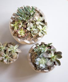 The perfect Easter basket-stuffer for the succulent lover in your life!