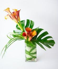Modern Tropics