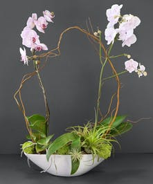 Perfect Pair Orchids & Airplants Olrando, Florida