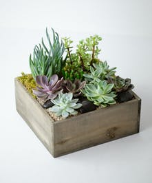 Succulent Garden Delivery Orlando, FL | Same-Day Delivery | In Bloom Florist