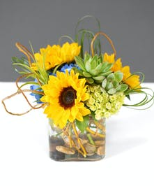Sunflowers & Succulents Orlando (FL) Same-day Delivery Orlando