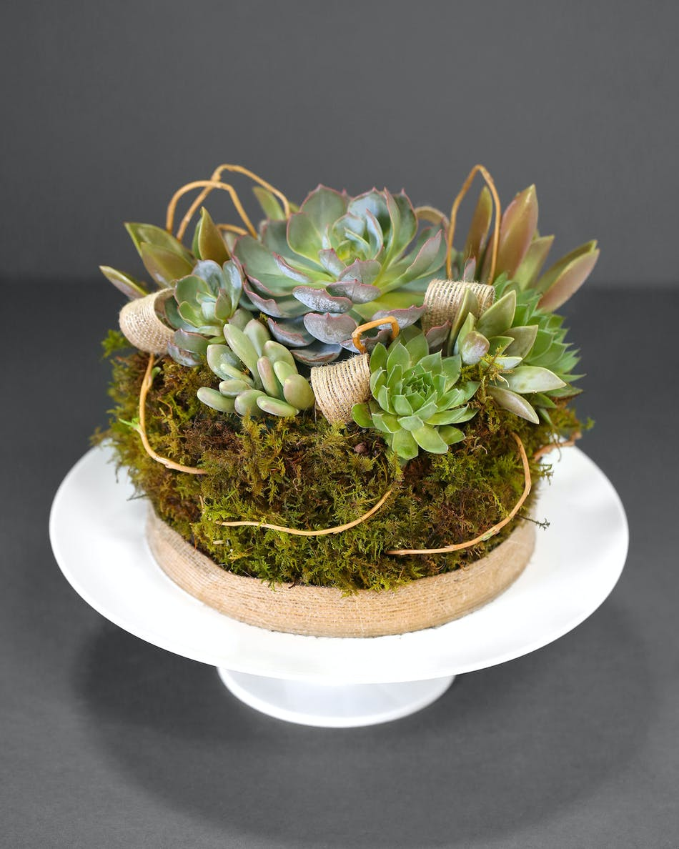 Sweet Succulent Cake Florist Orlando Fl In Bloom Florist Same