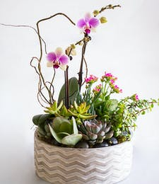Lavish Orchid + Succulent Planter