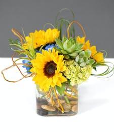 Sunflowers & Succulents