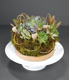 Sweet Succulent Cake
