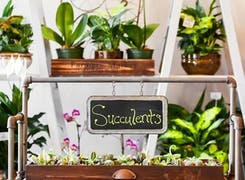 A sunny display of succulents and orchids